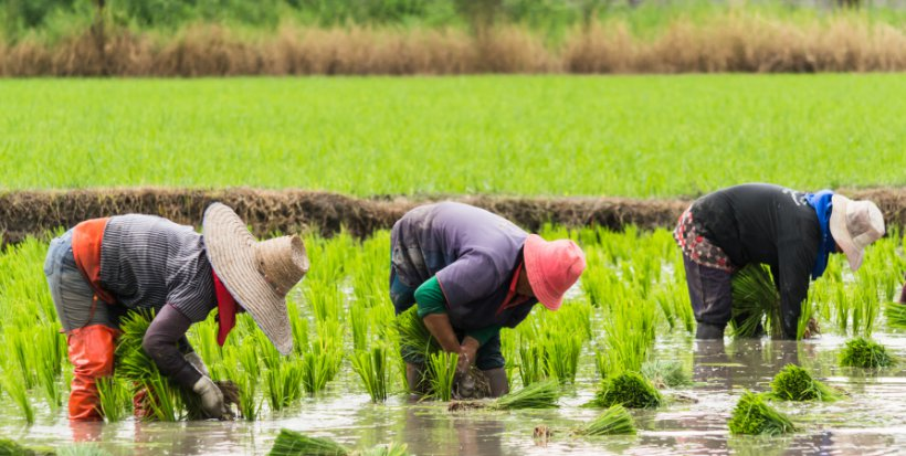 20190419 - kelas china_rice_field_workers.jpg